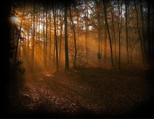 Beautiful-fall-woods-forest